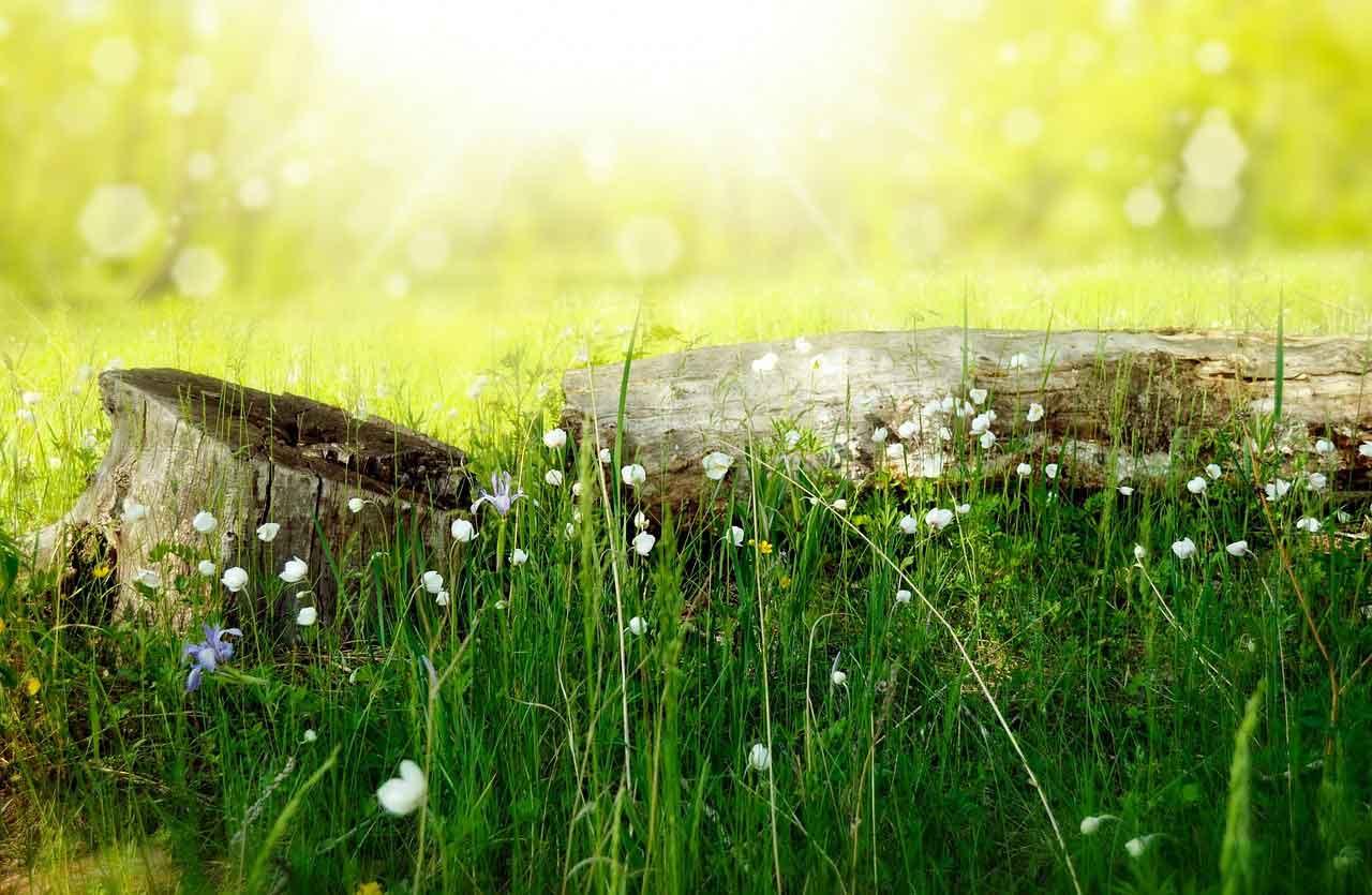 Sommerwiese als Symbol für Picknick auf Burg Schlitz Food Fellas Sommertipp