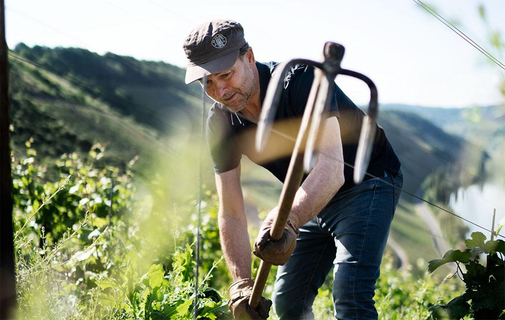 Bernhard Kirsten im Weinberg bei der Arbeit / Food Fellas